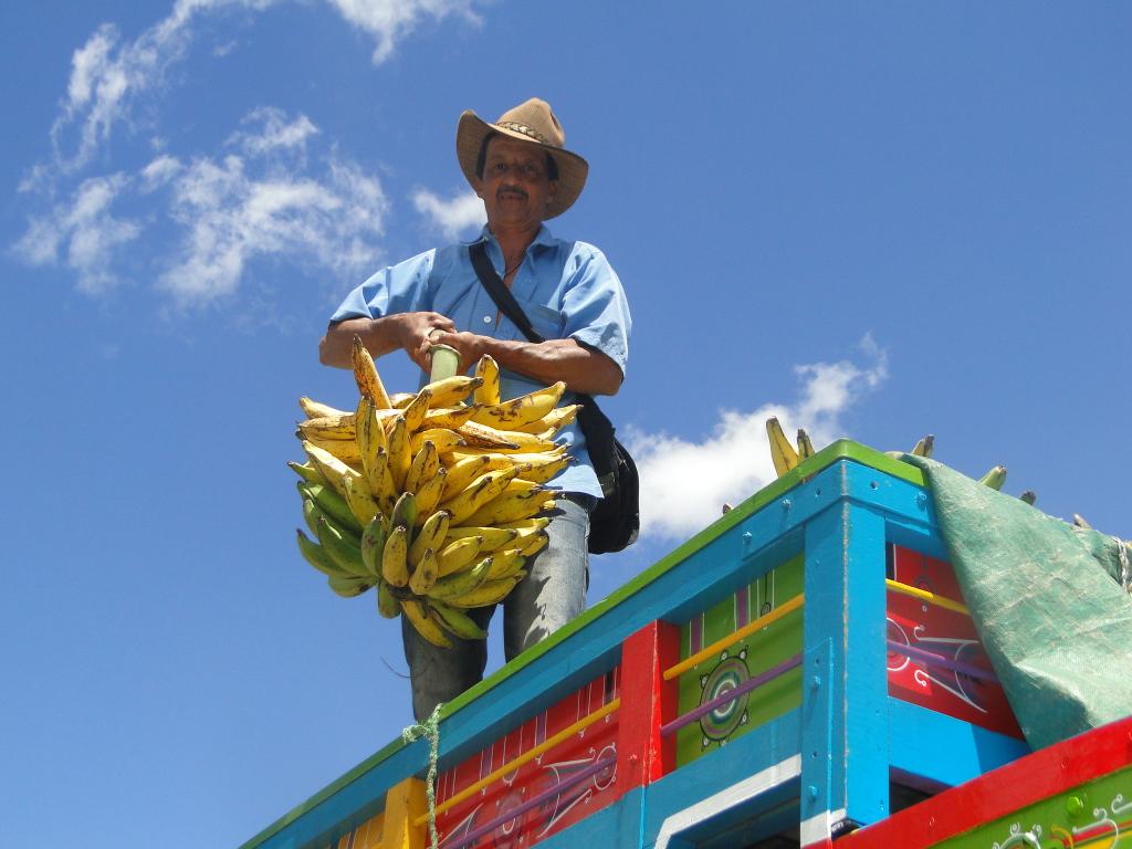 Plátanos traídos de Guadalupe.