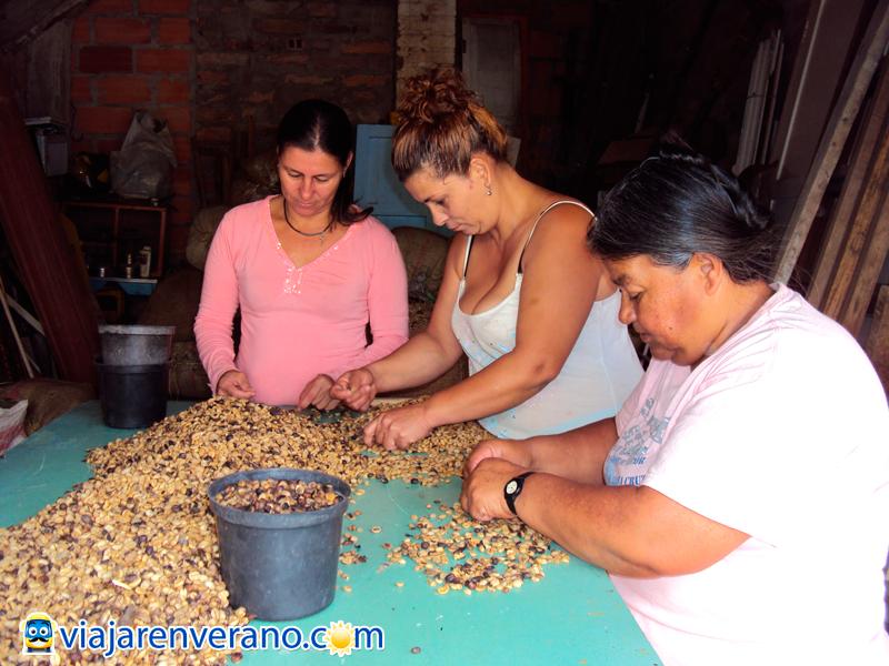 Mujeres escogiendo café.