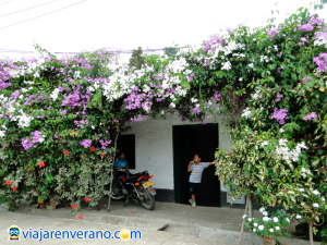 Residencia decorada con jardín.