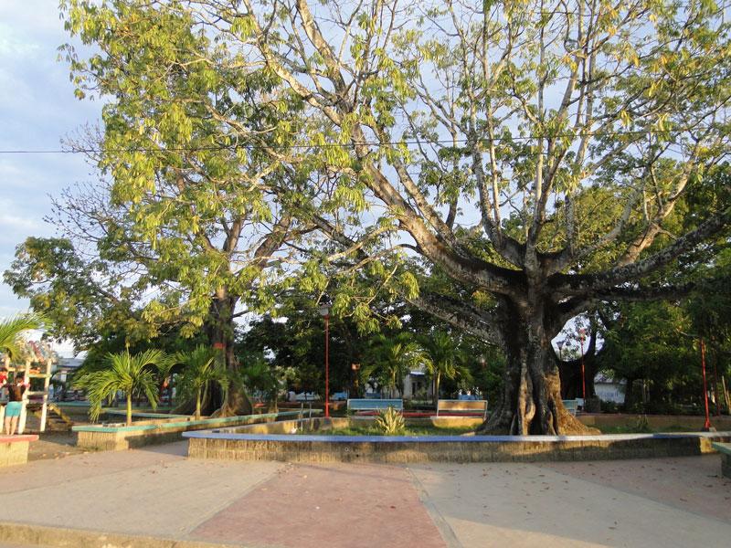 Árboles del centro de Achí.