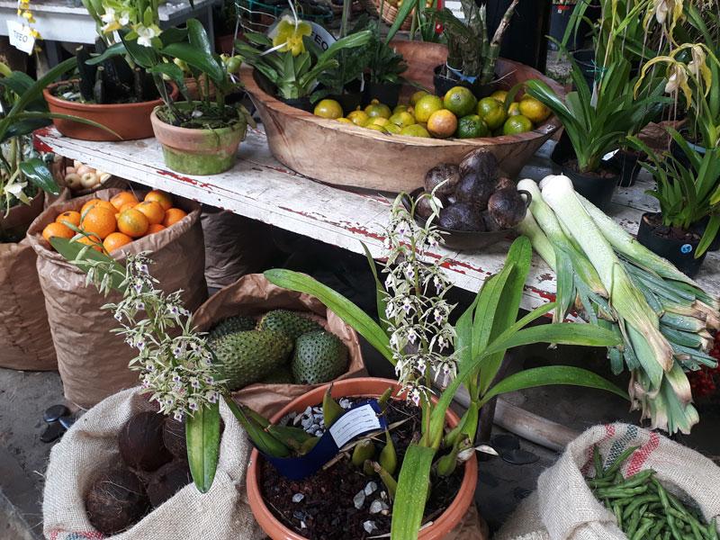 Orquídeas y frutas.