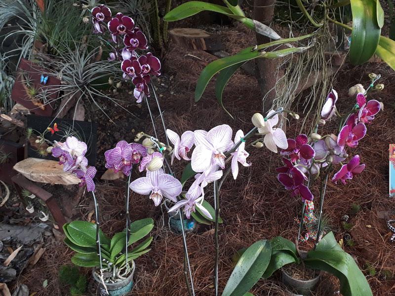 Orquídeas pequeñas.