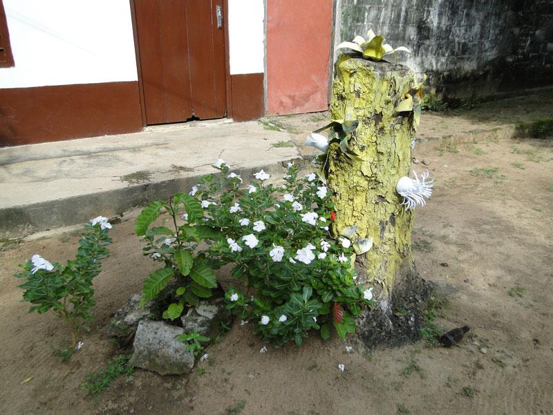 Tronco y plantas.