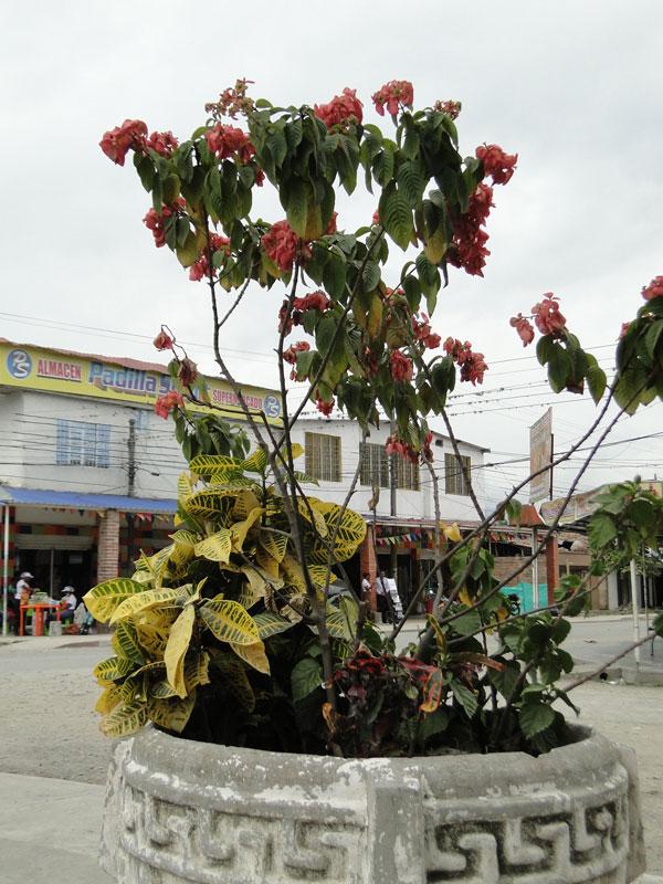 Plantas floridas.